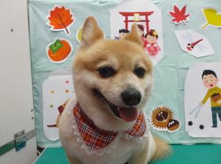 18.11.25川俣 福助.JPG