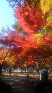関川29年11月.jpg