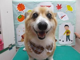 18.11.10清水 リッキー3.JPG