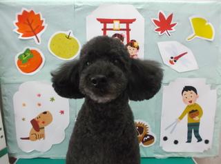 18.11.12渡辺 ミンキ.JPG