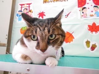 19.11.10樋口 いちご.JPG