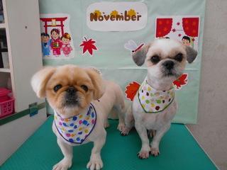 19.11.11そら&りゅう.JPG