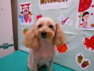 19.11.16佐藤 シェリー.JPG