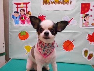 19.11.16吉田 詩.JPG