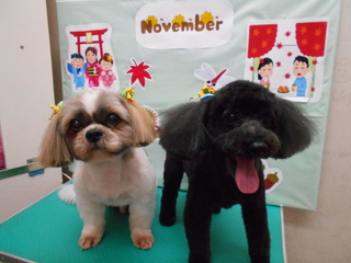 19.11.17トビ&ルビー.JPG