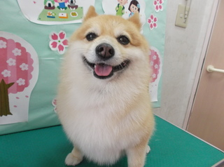 19.4.28川俣 福助.JPG