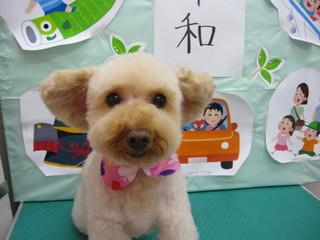 19.5.31沖田 クッキー.JPG
