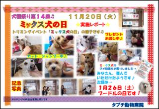 ミックス犬の日2レポート画像.png