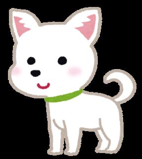 dog_chihuahua.png